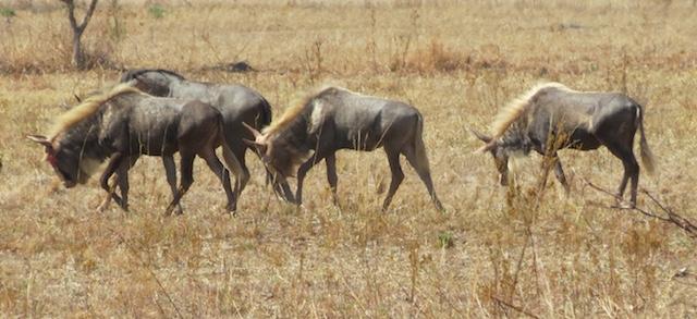 Kings My Wildlife SA