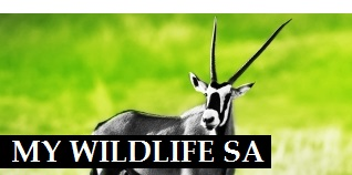 My Wildlife SA, game for sale