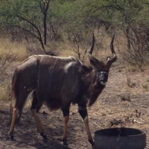 Nyala Package for sale in Limpopo, Dwaalboom