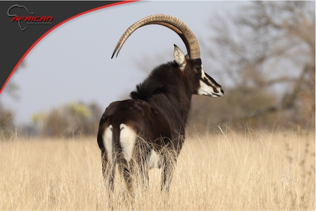 African Game Auctioneers Auction