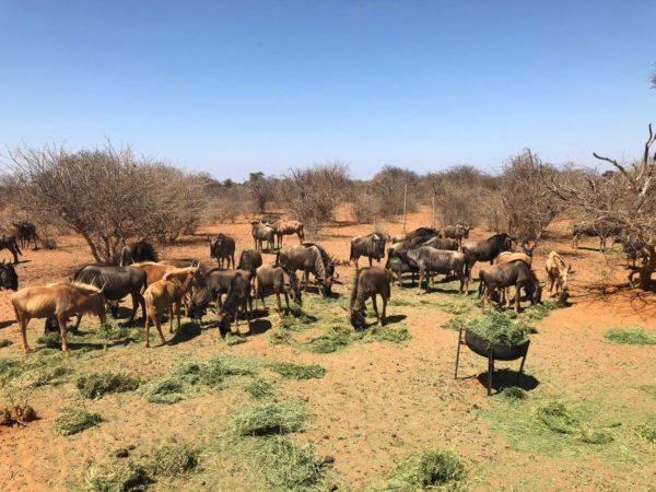 Blue Wildebeest Splits, Sentrum, Limpopo.