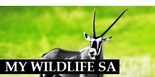 My Wildlife SA, game for sale