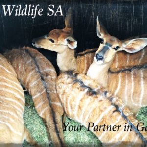 Nyala for sale Mega Load